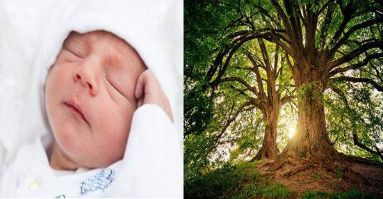 bebe arbol